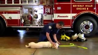 Emergency K-9 First Aid