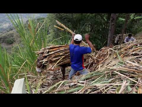 Cacao, zucchero e caffè Fairtrade: la storia di Norandino