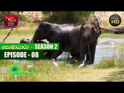Sobadhara - සොබාධාරා | Season- 02 | Episode- 08 | 2018-03-02 | Rupavahini Documentary