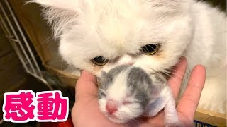 子猫誕生!!出産直後の産箱の中をウォッチング!!【貴重映像】