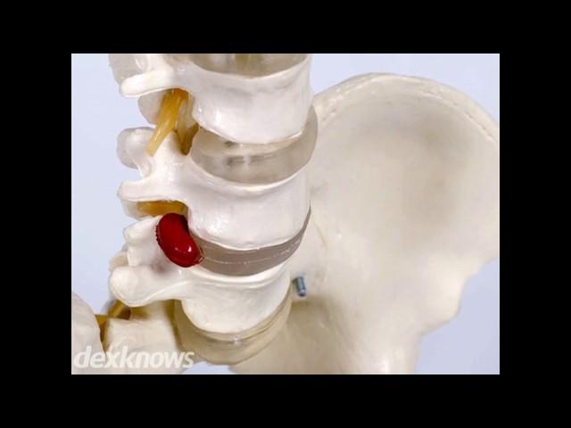 Tutor Chiropractic Health Care - North Aurora, IL