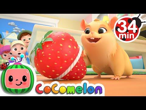 , title : 'Lost Hamster + More Nursery Rhymes & Kids Songs - CoComelon'