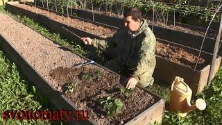 Смотреть онлайн Правила посадки и выращивания садовой земляники