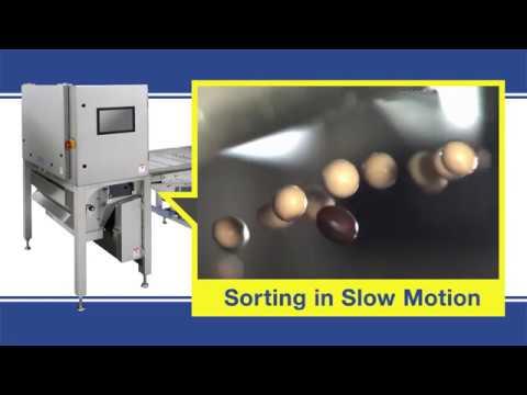 Belt Type Optical Sorter Slow Motion Video