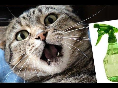 Какой запах отпугивает кошек | Вы будете удивлены! | Как отучить кошку от пакостей?