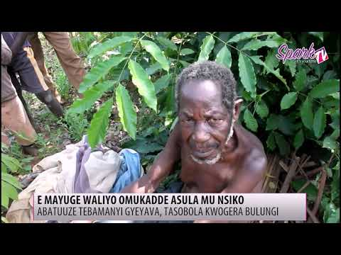 E Mayuge waliyo omukadde asula mu nsiko