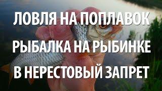 Время запрета ловли рыбы на рыбинском водохранилище