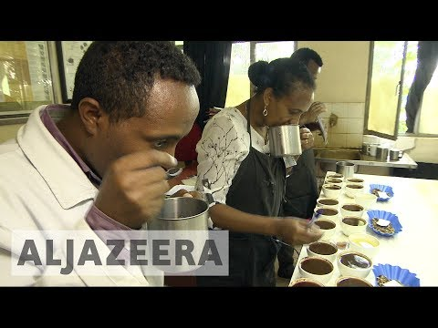 Climate change threatens Ethiopia coffee production