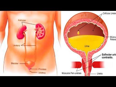 Productos del hígado para los diabéticos