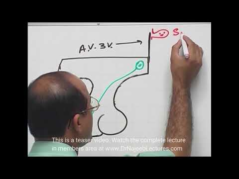 ADH (Vasopressin) – Posterior Pituitary Gland