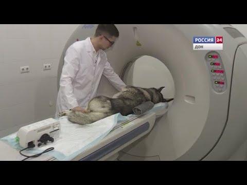 В Ростове открылась первая ветклиника с компьютерным томографом