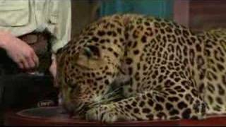 Dave Letterman: Jungle Jack Hanna
