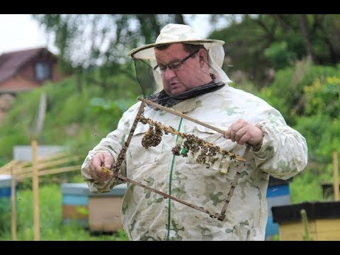 Рахматулин Д. К. - Ответы на вопросы по пчеловодству