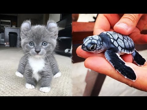 Cute Baby Animals Videos Compilation Cute Moment of The Animals -Cutest Animals #1