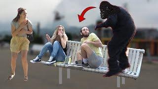 bromas farsa de gorila