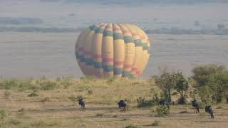 Balloon Safari in Maasai Mara