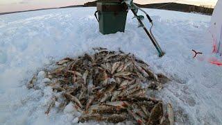 Отчеты о рыбалке челябинская область 2020 пески