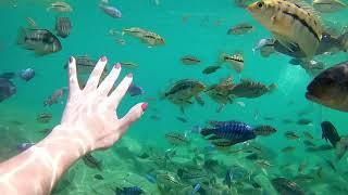Amazing Snorkeling Place- Lake Malawi