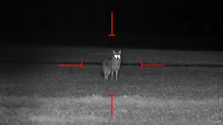 Gambar cover Coyote Hunting at Night - Dirt Naps 6