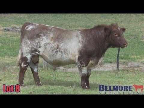 BELMORE QUANTUM Q206