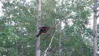001-Ever see a turkey fly?