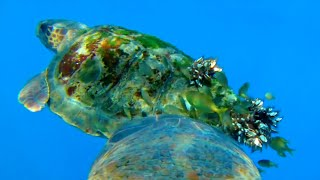 The Ocean Through Animal's Eyes   Animals with Cameras 2   BBC Earth