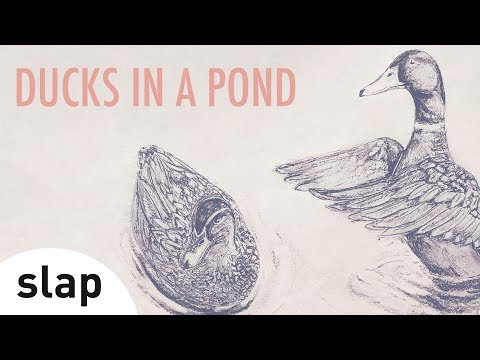 Música Ducks In a Pond
