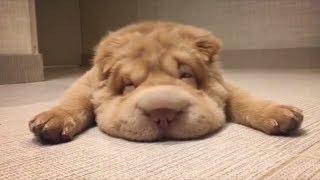 Смешные животные Приколы с животными Смешные Кошки и Собаки Калейдоскоп за 01 12 2018