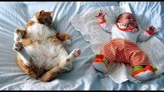 Babies and Cat are Best Friend | Коты и дети, лучшие друзья?! P.2