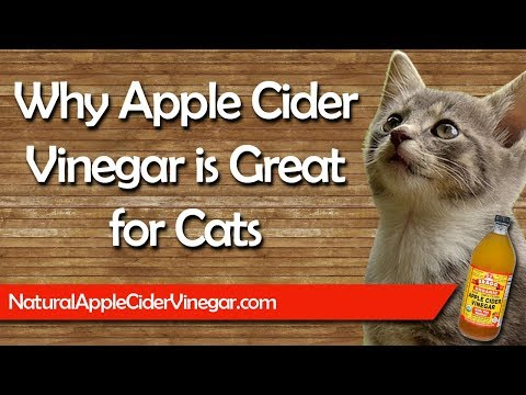 The Best Apple Cider Vinegar Natural Treatments For Cats