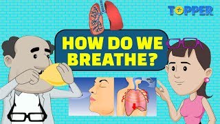How do your Lungs work? | Breathing | Class 8th Biology |