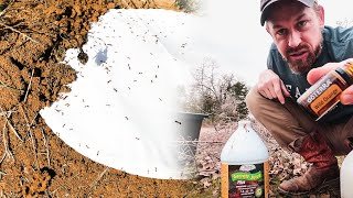 How to Kill Fire Ants IMMEDIATELY (without chemicals or pesticides )