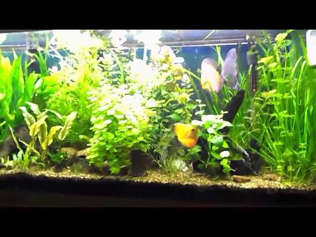 Basics of Maintaining a Fresh Water Planted Aquarium