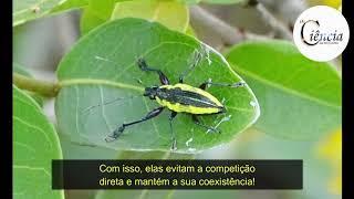 Besouros X Plantas: uma disputa mortal no cerrado.