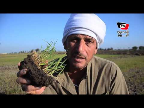 فلاحون يشتكون جفاف أراضي «الحفير» بالدقهلية بسبب إقامة كباري على إحدى الترع