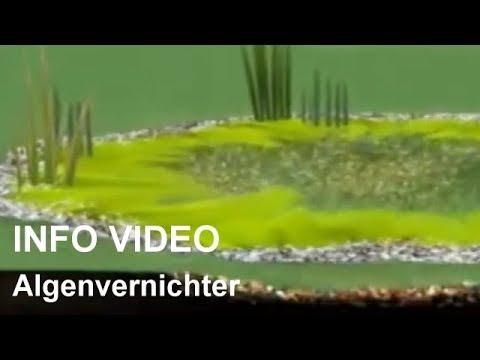 Algenvernichter für den Gartenteich - Video: Algenvernichter gegen Fadenalgen und Grünalgen