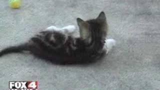 Двуногий котенок по кличке Грейси