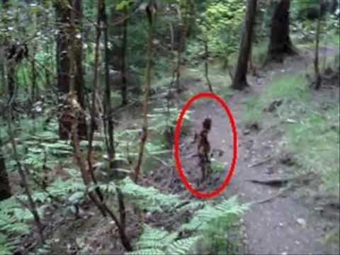 Случайное фото в лесу