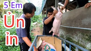 Anh Quẹo Đi Bắt Heo Trong Sự Vui Mừng - Queo So Happy Purchased New Piglets