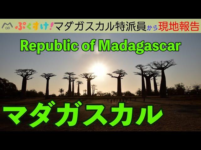 日本人もびっくり!マダガスカルのマーケット ぷくすけ!特派員