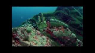 W głębinach Bajkału