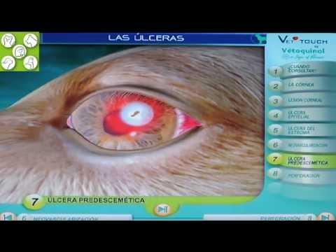 Las úlceras corneales en el ojo de los perros. Animación