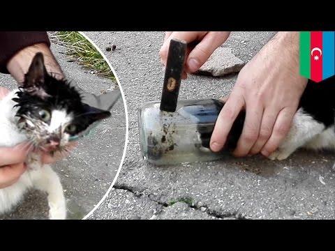 วิธีที่จะให้ลูกแมวแท็บเล็ตจากเวิร์ม