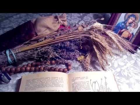 Кровохлебка лекарственная, описание и лечебное применение по материалам книги Попова А.П.