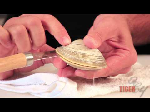 Using a Clam Knife: How to Open Clams