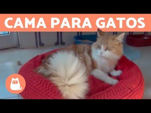 Cama para gatos de ExpertoAnimal - ¡Muy fácil de hacer!