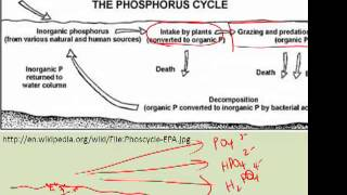 5. Phosphorus Cycle