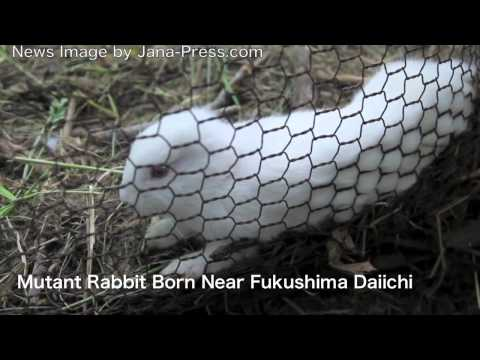 Anteprima Video Il Coniglio senza orecchie