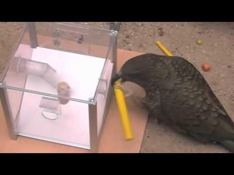 ذكاء الحيوان تجربة عملية