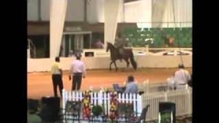Horse Judging Practice Class - Trail Pleasure Racking